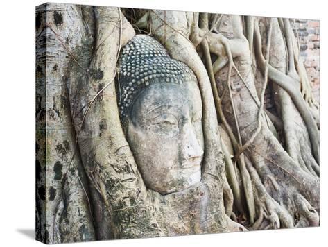Stone Buddha Head in Fig Tree, Wat Mahathat, Ayutthaya City, UNESCO World Heritage Site, Thailand-Matthew Williams-Ellis-Stretched Canvas Print