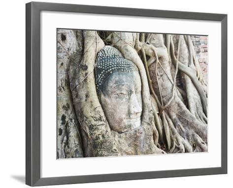Stone Buddha Head in Fig Tree, Wat Mahathat, Ayutthaya City, UNESCO World Heritage Site, Thailand-Matthew Williams-Ellis-Framed Art Print