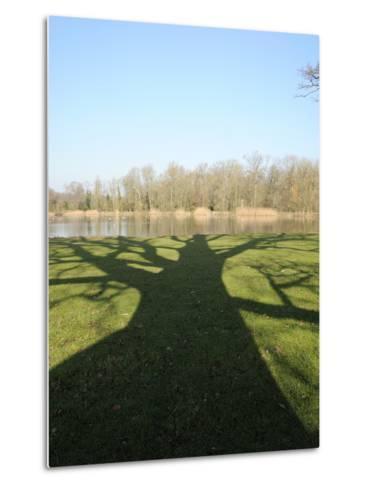 Shadow Cast by Large English Oak Tree (Quercus Robur) on Ornamental Lake, Corsham, England-Nick Upton-Metal Print