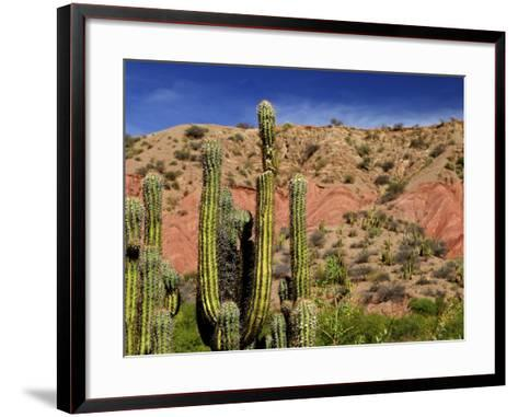 Cacti in Canon del Inca, Tupiza Chichas Range, Andes, Southwestern Bolivia, South America-Simon Montgomery-Framed Art Print
