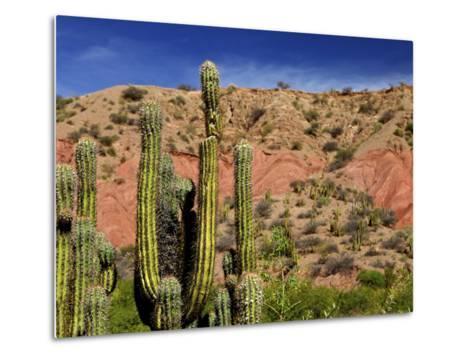 Cacti in Canon del Inca, Tupiza Chichas Range, Andes, Southwestern Bolivia, South America-Simon Montgomery-Metal Print