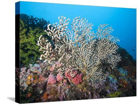 Reef Scene, Sulawesi, Indonesia, Southeast Asia, Asia-Lisa Collins-Stretched Canvas Print