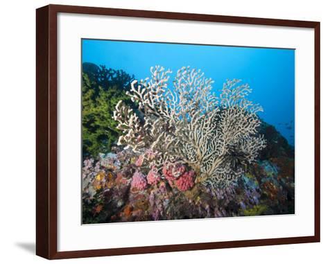 Reef Scene, Sulawesi, Indonesia, Southeast Asia, Asia-Lisa Collins-Framed Art Print