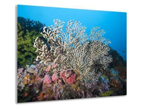 Reef Scene, Sulawesi, Indonesia, Southeast Asia, Asia-Lisa Collins-Metal Print