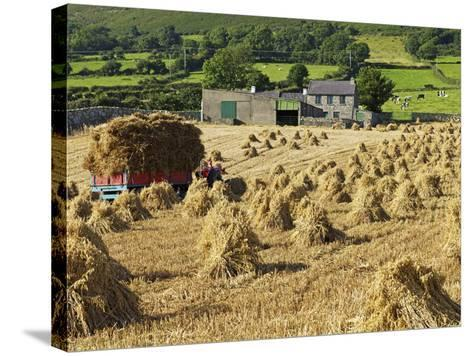 Oat Stooks, Knockshee, Mourne Mountains, County Down, Ulster, Northern Ireland, UK, Europe-Jeremy Lightfoot-Stretched Canvas Print