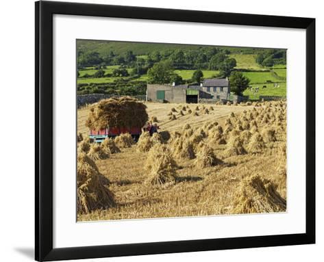 Oat Stooks, Knockshee, Mourne Mountains, County Down, Ulster, Northern Ireland, UK, Europe-Jeremy Lightfoot-Framed Art Print