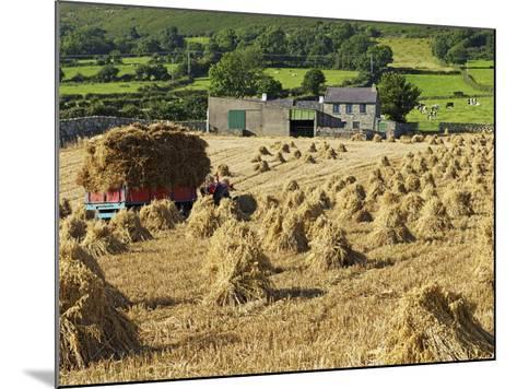 Oat Stooks, Knockshee, Mourne Mountains, County Down, Ulster, Northern Ireland, UK, Europe-Jeremy Lightfoot-Mounted Photographic Print