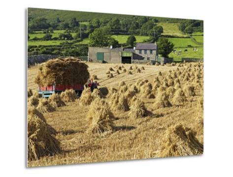 Oat Stooks, Knockshee, Mourne Mountains, County Down, Ulster, Northern Ireland, UK, Europe-Jeremy Lightfoot-Metal Print