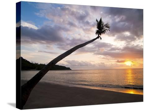 Overhanging Palm Tree at Nippah Beach at Sunset, Lombok Island, Indonesia, Southeast Asia-Matthew Williams-Ellis-Stretched Canvas Print