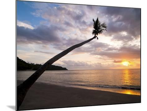 Overhanging Palm Tree at Nippah Beach at Sunset, Lombok Island, Indonesia, Southeast Asia-Matthew Williams-Ellis-Mounted Photographic Print