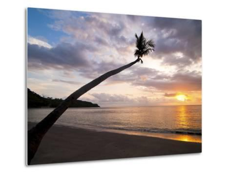 Overhanging Palm Tree at Nippah Beach at Sunset, Lombok Island, Indonesia, Southeast Asia-Matthew Williams-Ellis-Metal Print