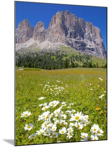 Sassolungo Group and Daisies, Sella Pass, Trento and Bolzano Provinces, Italian Dolomites, Italy-Frank Fell-Mounted Photographic Print