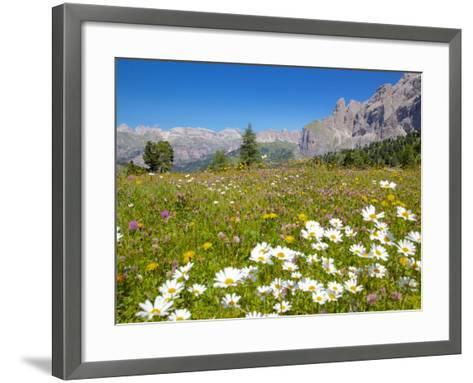 Daisies, Sella Pass, Trento and Bolzano Provinces, Italian Dolomites, Italy, Europe-Frank Fell-Framed Art Print