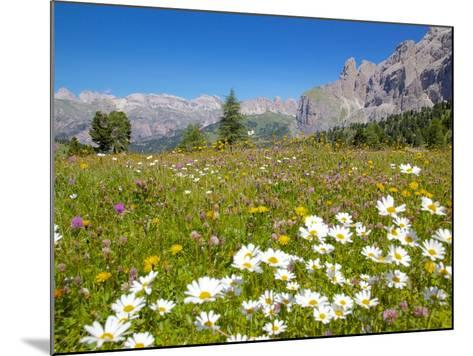 Daisies, Sella Pass, Trento and Bolzano Provinces, Italian Dolomites, Italy, Europe-Frank Fell-Mounted Photographic Print