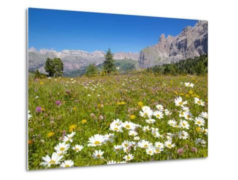 Daisies, Sella Pass, Trento and Bolzano Provinces, Italian Dolomites, Italy, Europe-Frank Fell-Metal Print