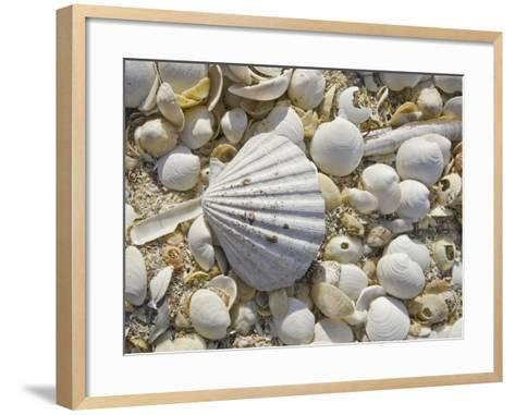 Sea Shells, Hebrides, Scotland, United Kingdom, Europe-Mark Harding-Framed Art Print