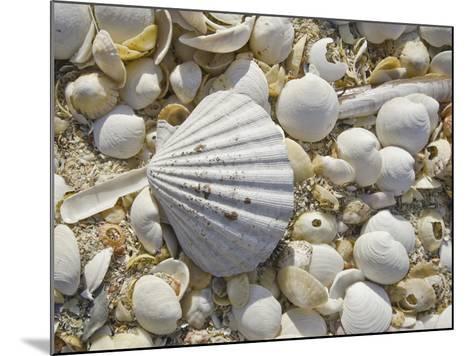 Sea Shells, Hebrides, Scotland, United Kingdom, Europe-Mark Harding-Mounted Photographic Print