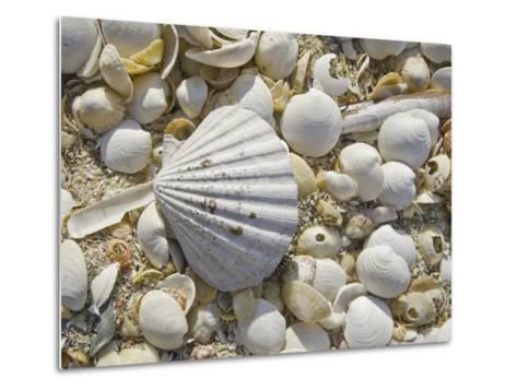 Sea Shells, Hebrides, Scotland, United Kingdom, Europe-Mark Harding-Metal Print