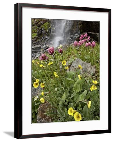 Alpine Avens (Acomastylis Rossii Turbinata)/Rosy Paintbrush (Castilleja Rhexifolia), Colorado, USA-James Hager-Framed Art Print