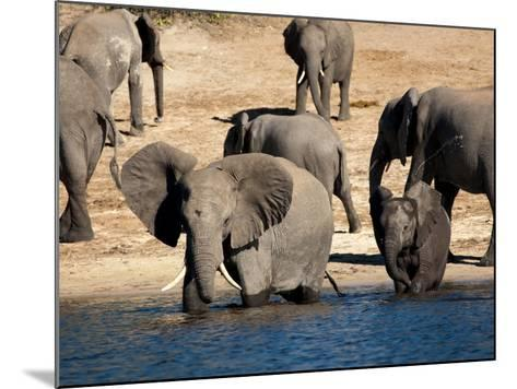 Elephants Drinking, Namibia, Africa-Kim Walker-Mounted Photographic Print