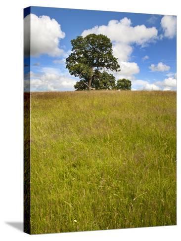 Summer Tree and Long Grass at Jacob Smith Park Knaresborough, North Yorkshire, Yorkshire, England-Mark Sunderland-Stretched Canvas Print