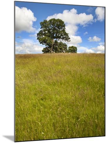 Summer Tree and Long Grass at Jacob Smith Park Knaresborough, North Yorkshire, Yorkshire, England-Mark Sunderland-Mounted Photographic Print