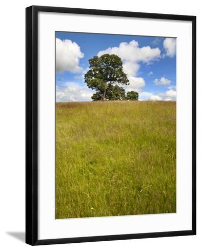 Summer Tree and Long Grass at Jacob Smith Park Knaresborough, North Yorkshire, Yorkshire, England-Mark Sunderland-Framed Art Print