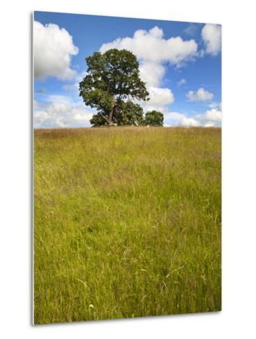 Summer Tree and Long Grass at Jacob Smith Park Knaresborough, North Yorkshire, Yorkshire, England-Mark Sunderland-Metal Print