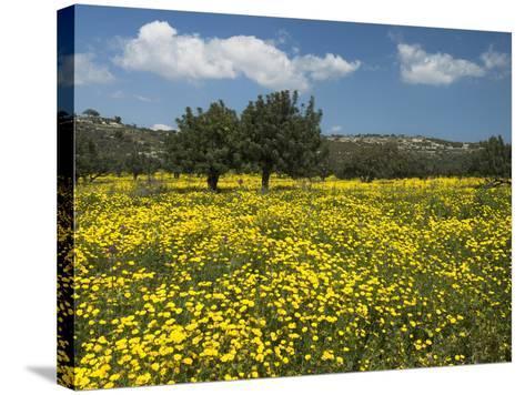 Spring Meadow, Near Limassol, Cyprus, Europe-Stuart Black-Stretched Canvas Print