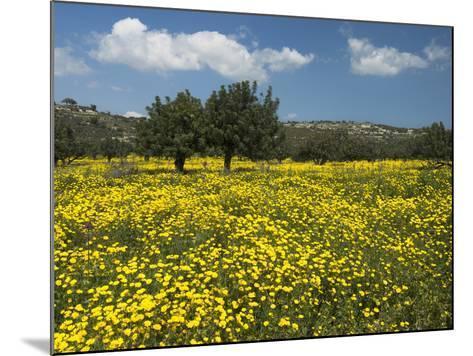 Spring Meadow, Near Limassol, Cyprus, Europe-Stuart Black-Mounted Photographic Print
