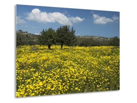 Spring Meadow, Near Limassol, Cyprus, Europe-Stuart Black-Metal Print