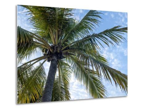 Coconut Tree, Low Angle View, Providenciales, Turks and Caicos Islands, West Indies, Caribbean-Kim Walker-Metal Print