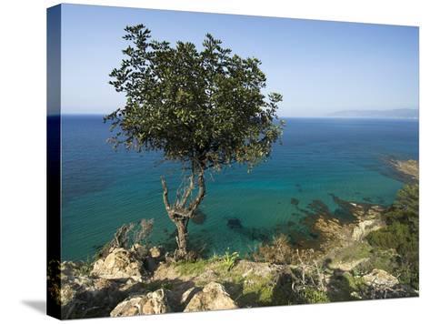 View Along Chrysochou Bay on North West Coast, Near Latsi, Cyprus, Mediterranean, Europe-Stuart Black-Stretched Canvas Print
