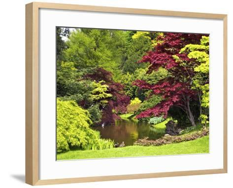 Acer Trees and Pond in Sunshine, Gardens of Villa Melzi, Bellagio, Lake Como, Lombardy, Italy-Peter Barritt-Framed Art Print