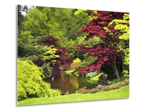 Acer Trees and Pond in Sunshine, Gardens of Villa Melzi, Bellagio, Lake Como, Lombardy, Italy-Peter Barritt-Metal Print