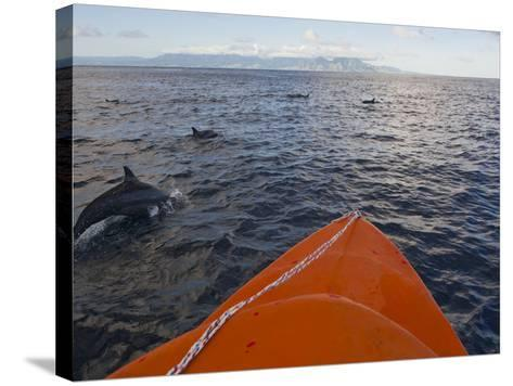 Dolphins Swimming with a Boat, Savo Island, Solomon Islands, Pacific-Michael Runkel-Stretched Canvas Print