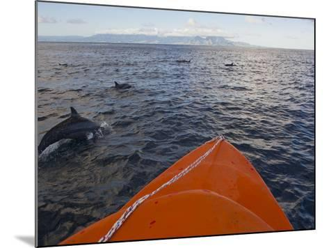 Dolphins Swimming with a Boat, Savo Island, Solomon Islands, Pacific-Michael Runkel-Mounted Photographic Print