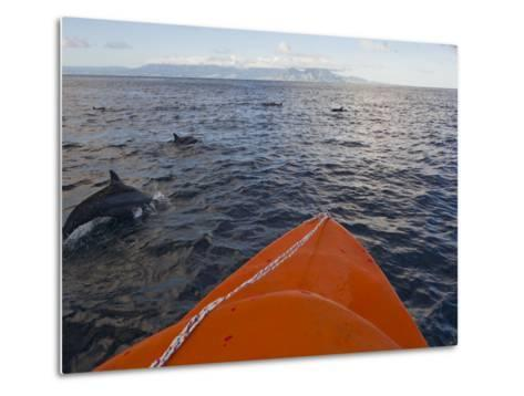Dolphins Swimming with a Boat, Savo Island, Solomon Islands, Pacific-Michael Runkel-Metal Print