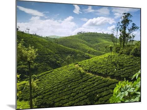 View over Tea Plantations, Near Munnar, Kerala, India, Asia-Stuart Black-Mounted Photographic Print