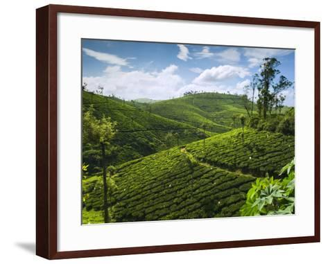 View over Tea Plantations, Near Munnar, Kerala, India, Asia-Stuart Black-Framed Art Print