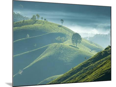 Early Morning Mist over Tea Plantations, Near Munnar, Kerala, India, Asia-Stuart Black-Mounted Photographic Print