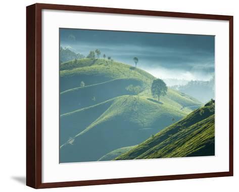 Early Morning Mist over Tea Plantations, Near Munnar, Kerala, India, Asia-Stuart Black-Framed Art Print