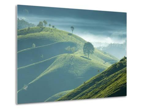 Early Morning Mist over Tea Plantations, Near Munnar, Kerala, India, Asia-Stuart Black-Metal Print