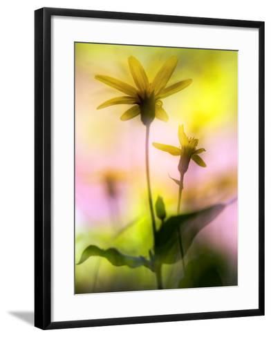 Arnica-Ursula Abresch-Framed Art Print
