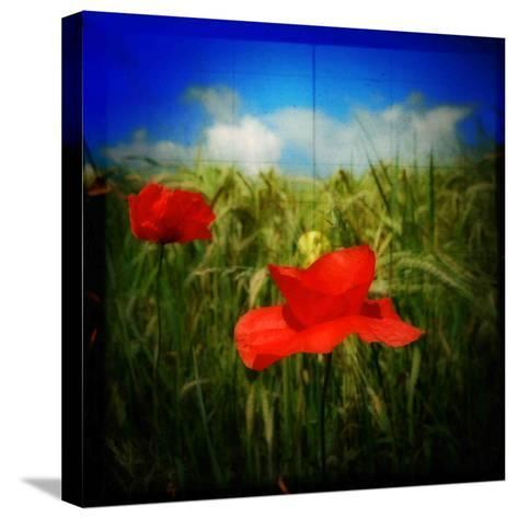 Got Candy-Philippe Sainte-Laudy-Stretched Canvas Print