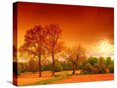 Orange World-Philippe Sainte-Laudy-Stretched Canvas Print