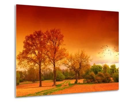 Orange World-Philippe Sainte-Laudy-Metal Print