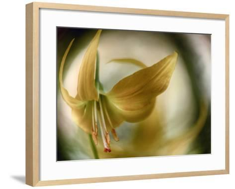 Gold Angel-Ursula Abresch-Framed Art Print