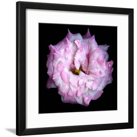 Lysianthus Pink-Magda Indigo-Framed Art Print