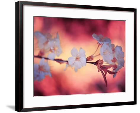 Spring Time 2-Philippe Sainte-Laudy-Framed Art Print